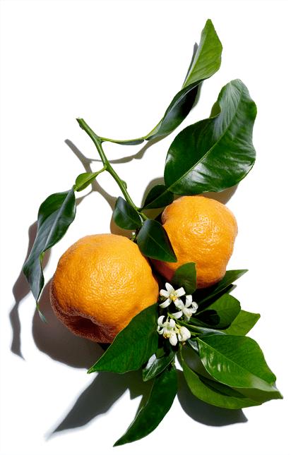 Bitter orange wax