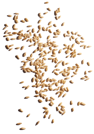 Organic oat sugars