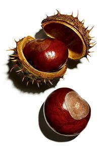 chestnut escin