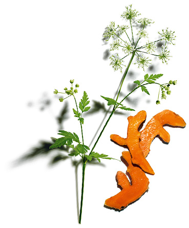 Cow parsley and turmeric
